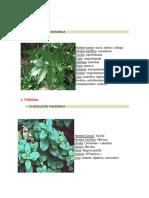 plantas medicinales (2)