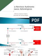 farmacos-adrenergicos 1