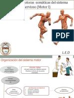 Funciones Motoras - Medicina