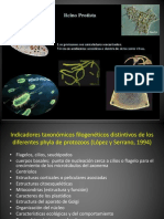 11. Protistas.pdf