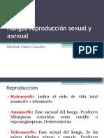 8. Hongos sexual y asexual (1).pdf