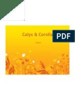 Presentation Case Study Calyx & Corolla
