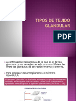 Tipos de Tejido Glandular