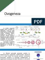 3. Ovogeneza.Ovarul.Foliculi ovarieni.Ciclul menstrual