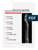 Anatomia colunas