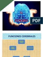 CEREBRO Y EVOLUCIÒN.pptx