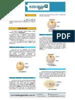 [Teoria] Embriologia.pdf