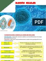 1. Respiración celular.pdf