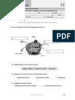 Ficha de avaliação (2 - C) - Trocas nutricionais nos animais.docx