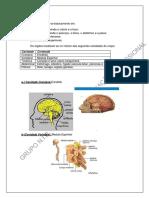 Anatomia%20e%20fisiologia%20humana.docx