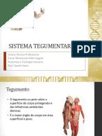 Anatomia e Fisiologia 6 - Sistema Tegumentar