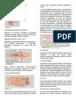 RESUMEN DE FISIO.docx