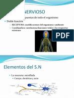SISTEMA NERVIOSO1