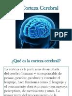 La Corteza Cerebral.pptx