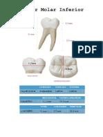 molar inferior imprimir.docx