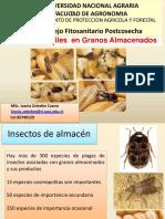 Plagas Insectiles en Granos Almacenados 2018.pdf