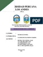 Informe Neuroanatomia.docx