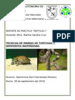 reptiles reporte 2.docx