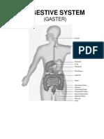 2. Gaster.docx