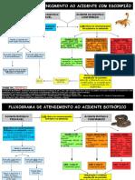 FLUXOGRAMA ATENDIMENTO ANIMAIS PEÇONHENTOS