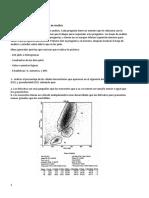 CITOMETRÍA DE FLUJO.docx
