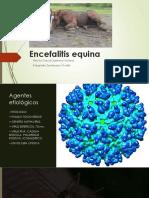 Encefalitis-equina- final.pptx