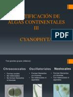 Algas III. Cyanobacteria.pptx