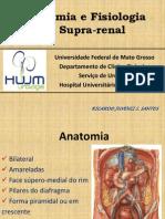 Tumores Da Adrenal - Anatomia e Fisiologia - Aula 3o Ano UFMT