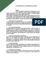 PROYECCIONES DE LOS ÓRGANOS EN LA SUPERFICIE DEL CUERPO
