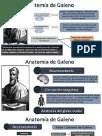 anatomia de galeno.pptx
