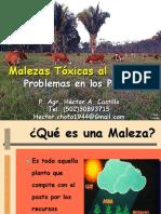 Malezas Tóxicas de Pasturas 2020_1.pdf