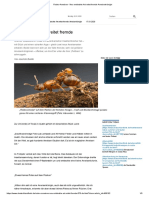 Rodeo-Ameisen - Neu entdeckte Art reitet fremde Ameisenkönigin