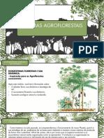 Mod4 - O Ecossistema Florestal
