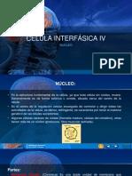 CELULA INTERFÁSICA IV