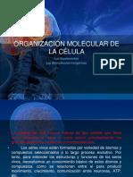 ORGANIZACIÓN MOLECULAR DE LA CÉLULA I