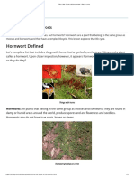 The Life Cycle of Hornworts _ Study.com