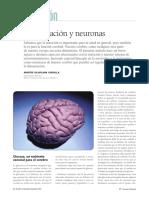 Alimentacion y neuronas