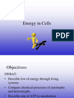 Energy in a Cell new.ppt