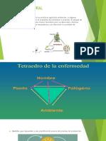 CONTROL CULTURAL DIAPOSITIVAS.pdf