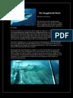 Snaggletooth Shark-By Rob Kyle