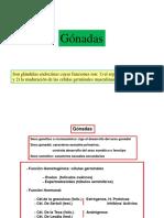 GONADAS.pdf