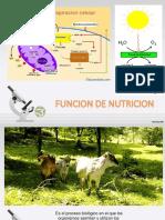 FUNCION DE NUTRICION.pptx