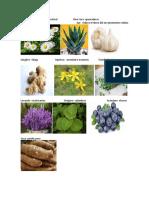 medicina natural y que cura
