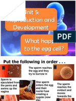 What happens to the egg cell- notes.ppt