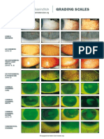 Grading_Scales_web.pdf