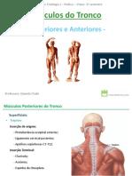Musculos do Tronco
