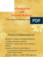 Inflammation process by YL.pptx
