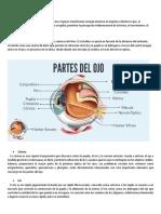 estructura y funcion del ojo