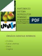 ANATOMIA DO APARELHO REPRODUTOR FEMININO.ppt