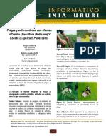 Plagas-Y-Enfermedades-Que-Afectan-Al-Tumbo-(Passiflora-Mollisima)-Y-Locoto-(Capsicum-Pubescens).pdf